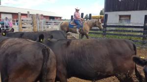 Sortering av djur fån hästen