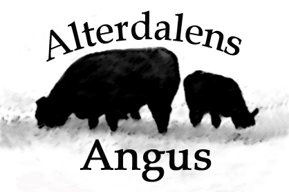 Alterdalens Angus