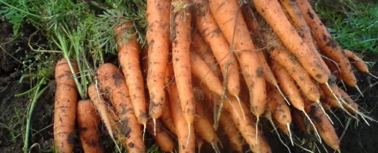 Årets morötter är beställd!!